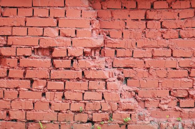 Textura pintada parede de tijolos amarelo-vermelho de tijolos velhos e arbustos de germinação.