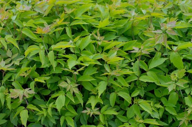 Textura plano de fundo verde planta