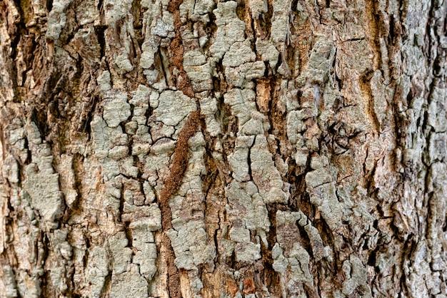 Textura rústica seca da casca de árvore, uso gráfico dos recursos para o fundo.