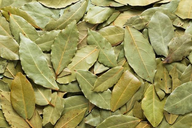 Textura seca da folha de louro