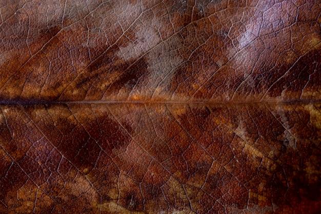 Textura seca da folha de magnólia do outono. folha de magnólia marrom seca com fundo de textura de manchas amarelas