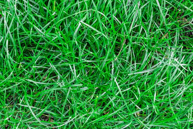 Textura sem costura grama verde.