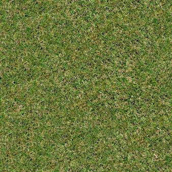 Textura tileable sem costura de grama jovem primavera.