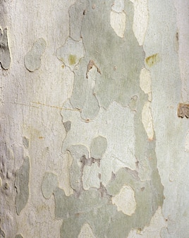 Textura tronco