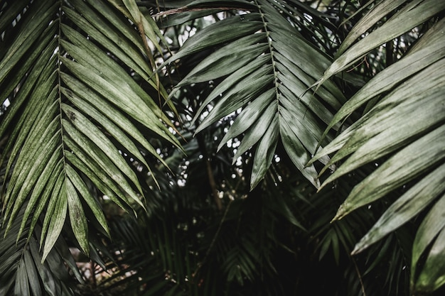 Textura tropical exótica de palma