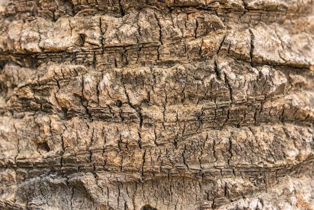 Textura velha de casca de palmeira seca de perto