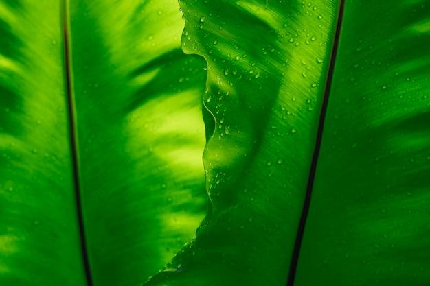 Textura verde da folha com gota da chuva, fundo vazio do espaço.