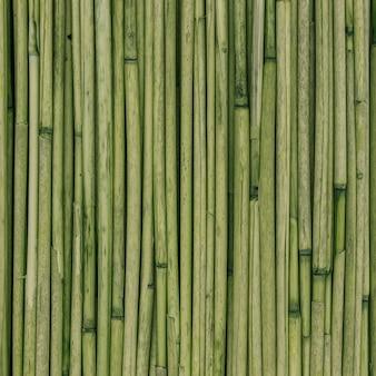 Textura verde de juncos ou bambu para o fundo