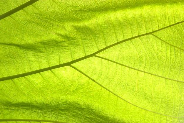 Textura verde folha abstrata para plano de fundo