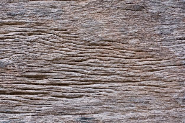 Texturas de casca de madeira