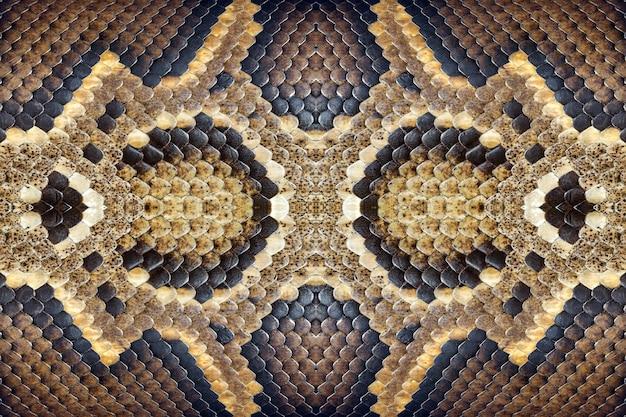 Texturas e padrões da jibóia.