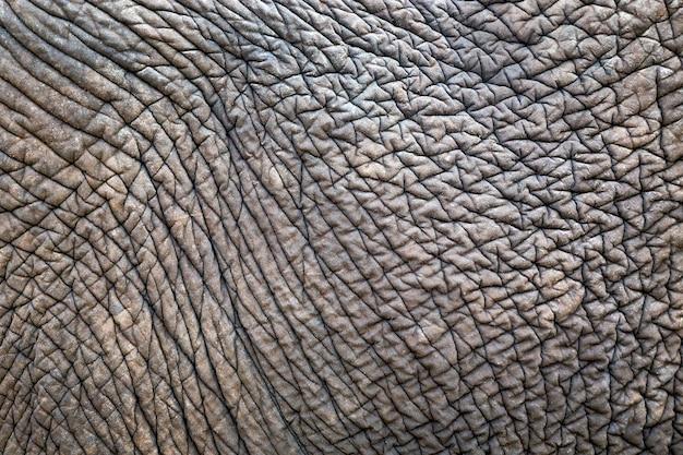 Texturas e padrões de elefantes asiáticos para o fundo.