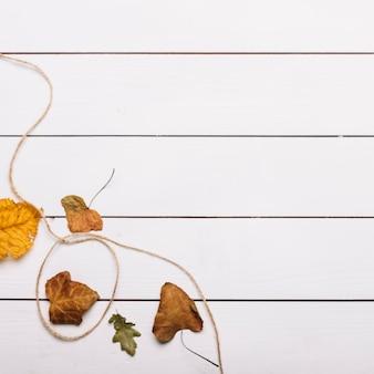Thread perto de folhas de outono