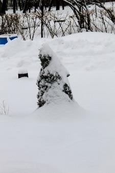 Thuja árvore no parque da cidade de inverno