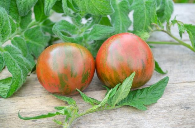 Tigerella de tomates vermelhos saborosos