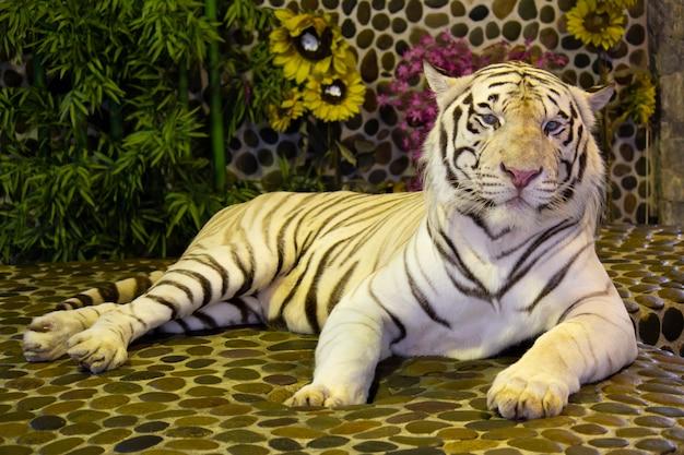Tigre de bengal branco no jardim zoológico. pattaya, tailândia
