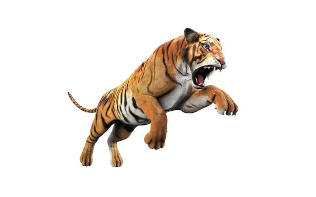Tigre de bengala perigoso isolado no fundo branco com traçado de recorte