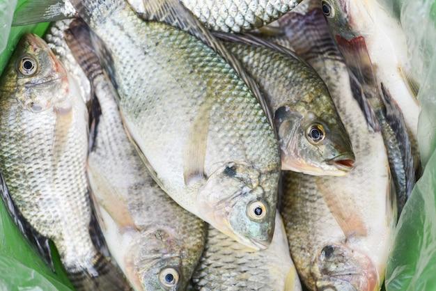 Tilápia fresca de água doce para cozinhar alimentos, tilápia crua da fazenda