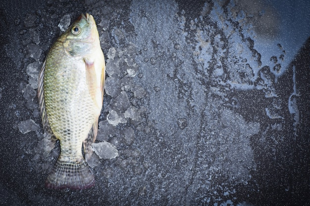 Tilápia peixe de água doce para cozinhar alimentos, tilápia crua fresca da fazenda, vista superior de peixe fresco