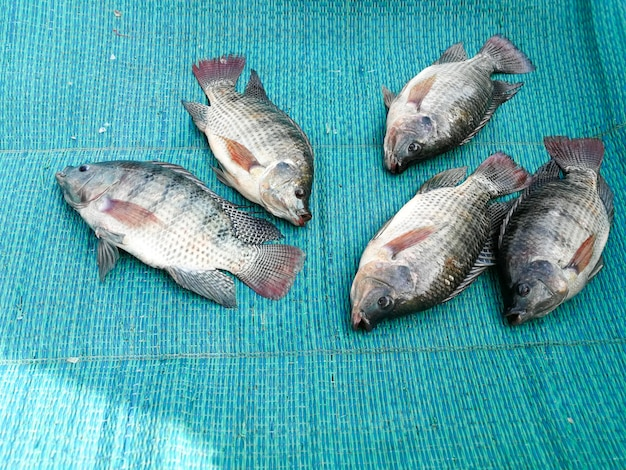 Tilápias frescas no mercado local da tailândia