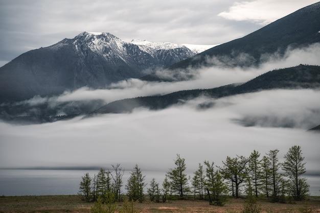 Timelapse de tempo chuvoso nas montanhas, nevoeiro enevoado soprando sobre a floresta de pinheiros