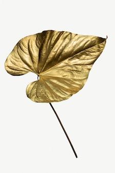 Tinta dourada em spray em folha de alocasia
