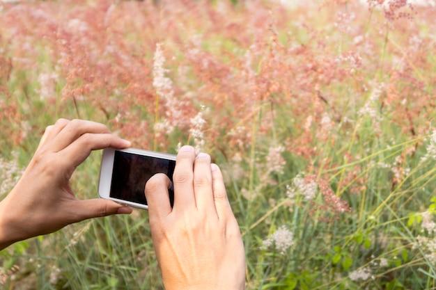 Tirando fotos de flores selvagens.
