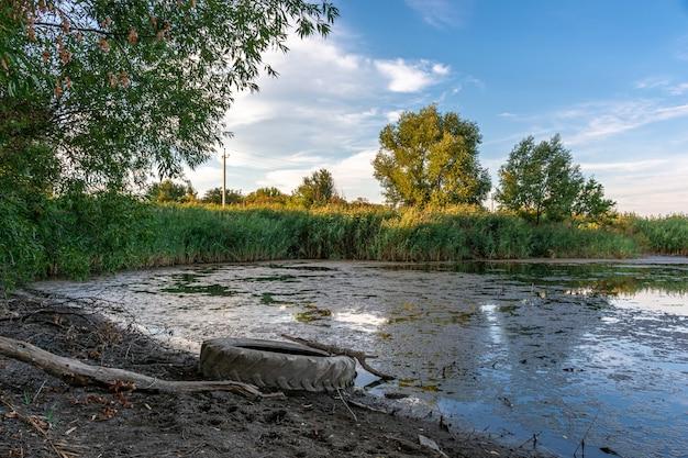 Tire na margem de um lago coberto de vegetação no meio de árvores verdes ao pôr do sol. paisagem rural, ecologia