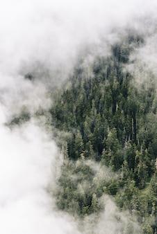 Tiro aéreo vertical de nuvens acima da floresta