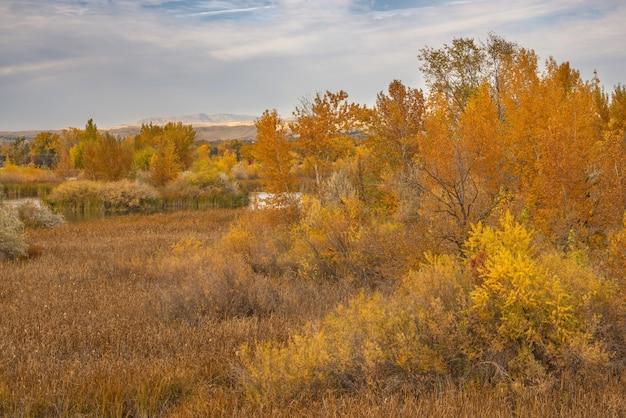 Tiro bonito de árvores de folhas amarelas em um campo gramado seco com um lago à distância