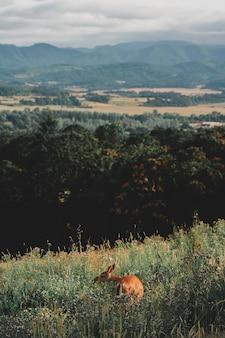 Tiro bonito de um cervo revestido marrom selvagem em uma colina verde em uma floresta