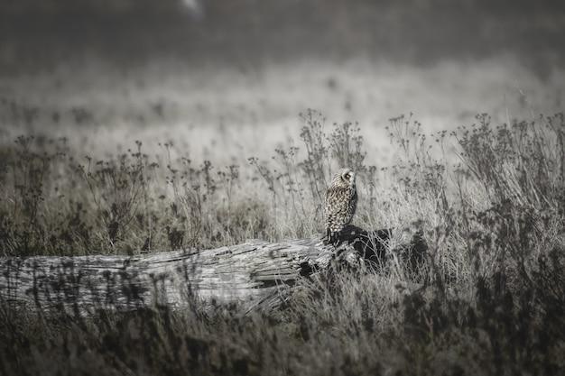 Tiro bonito de uma coruja em um tronco de árvore no campo de grama seca durante o dia