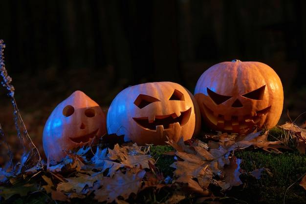 Tiro de abóboras de halloween em uma floresta escura assustador