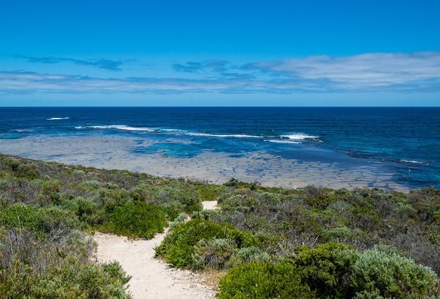 Tiro de alto ângulo de plantas verdes na costa do mar sob o céu nublado