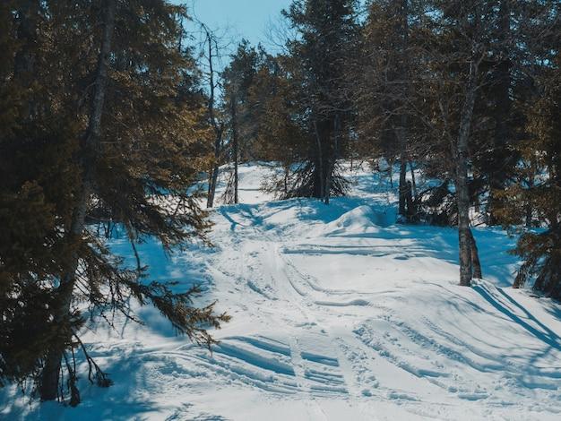 Tiro de alto ângulo dos traços de céu no chão nevado da floresta
