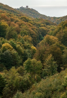 Tiro de ângulo alto de uma floresta de árvores verdes durante o dia