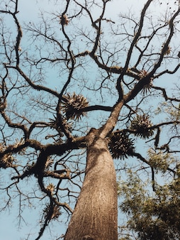 Tiro de ângulo baixo bonito de uma árvore com galhos curvos longos e um céu azul claro