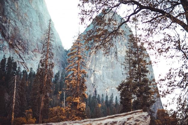Tiro de ângulo baixo da bela paisagem de pedras altas atrás de uma floresta e um galho de uma árvore na frente