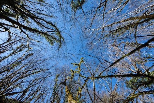 Tiro de ângulo baixo das árvores secas perto da cachoeira butori em ístria, croácia