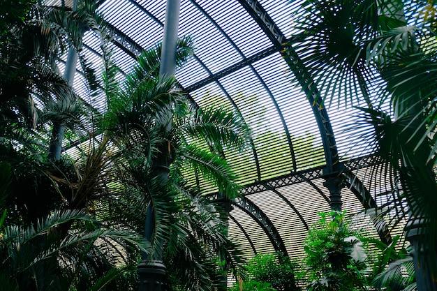Tiro de ângulo baixo de belas árvores verdes dentro de um galpão durante o dia