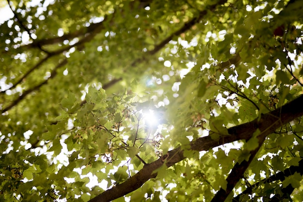 Tiro de ângulo baixo de folhas verdes com o sol brilhando através dos galhos