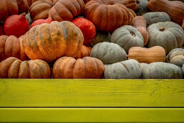 Tiro de ângulo baixo de muitas abóboras coloridas preenchidas em uma caixa de madeira verde