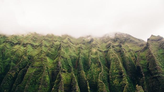 Tiro de ângulo baixo de uma montanha alta no nevoeiro com musgo crescendo nele