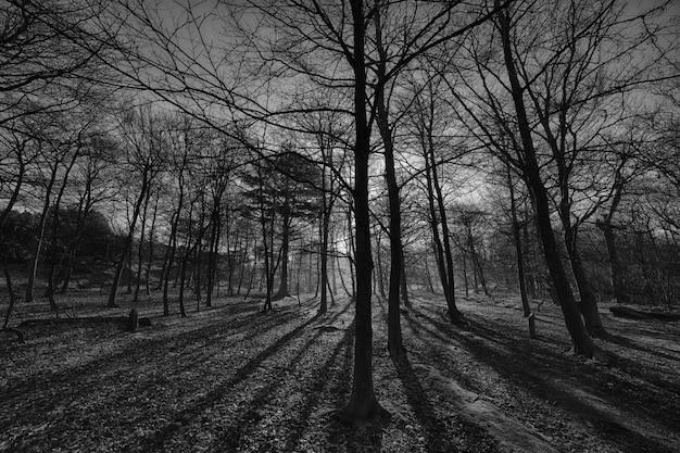 Tiro de ângulo baixo em escala de cinza de árvores altas no meio da floresta durante o pôr do sol