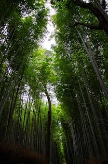 Tiro de ângulo baixo vertical de uma floresta cheia de árvores altas no início da manhã