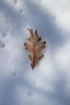 Tiro de anjo alto de uma folha de outono na neve