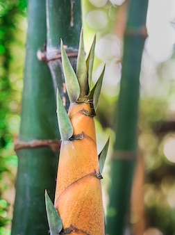 Tiro de bambu