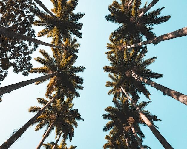 Tiro de belas palmeiras tropicais em uma cidade costeira