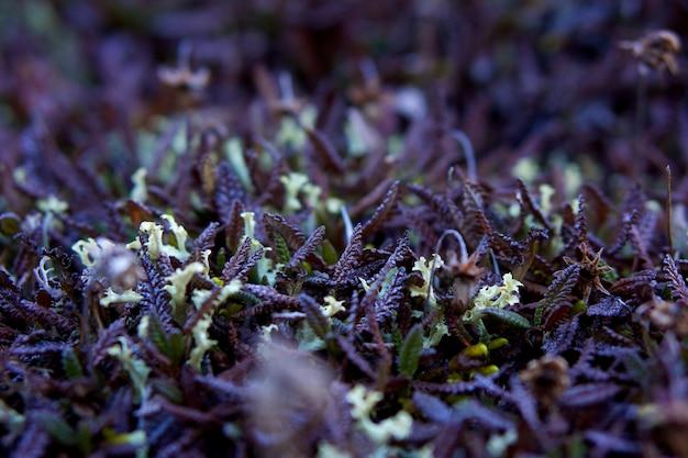 Tiro de foco seletivo closeup de grama nos portões do parque nacional do ártico