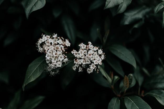 Tiro de foco seletivo closeup de lindas flores de pétalas brancas com folhas verdes